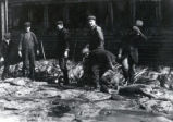 (03 02 001) Waterfront, St. John's. Men sorting seal pelts