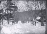 (27 04 001) Places, Unidentified. Winter scene: trees and snow
