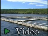 Aquaculture: Innovation for a Cold Water Environment