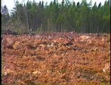 Land clearing in Newfoundland : a new approach