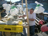 Jack Wells drying fish - Soebys bags hung to keep the birds away