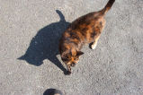 Cat on ground, Lower Battery Road