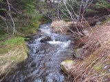 Whitewood Gully flows toward the River