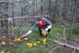 Barrett, Terra. Picking chanterelles in the woods.