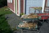 Garlic on a trolley on Dena Wiseman and Ralph Carey's property