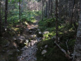East Coast Trail, Rocky Forest Path.