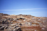 Grates Cove rock walls. 2