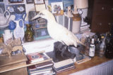 Various items and Gannet taxidermy. 1