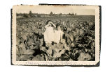 Cantwell, Theresa Squires. Black and white photograph of two women in cabbage field from Theresa...