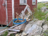 Caribou antlers by Hewitt's stage, Joe Batt's Arm