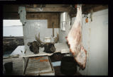 Moose heads and moose meat in Martin Hart's stage, Deep Bay