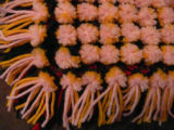 A close up view of the pom poms on the topside of a completed pillow top