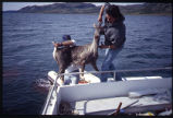 Willie Fox and Otto with Caribou, off Okak, Labrador