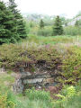 Jones root cellar, foundation and landscape,Brigus