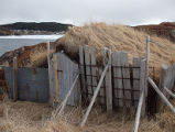 Pennell's Point Root Cellar 4, Twillingate, Newfoundland
