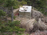 Black Duck Harbour Root Cellar 1 Twillingate, Newfoundland