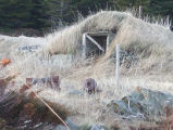 Bluff Head Cove Root Cellar 4 Twillingate, Newfoundland