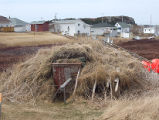 Upper Jenkins' Cove Root Cellar 21, Twillingate, Newfoundland