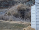 Bluff Head Cove Root Cellar 9 Twillingate, Newfoundland