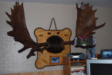 Roberts, Sharon.  Antlers hanging in Sahron Roberts' home, Quirpon.