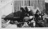 Norris Point woman milking cow. Black and white photograph.