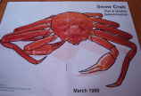 Patey, Gwen.  A crab image that Gwen Patey uses for her Newfoundland quilts, Quirpon.