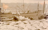 S.S.Bernicia at Job Brothers & Co. north side premises, St. John's harbour.