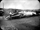 Men with a whale carcass on a wharf