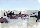 ''Students and boys hauling logs from the country with reindeer.''