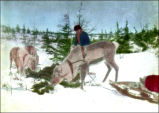 Unidentified man with reindeer, during the winter